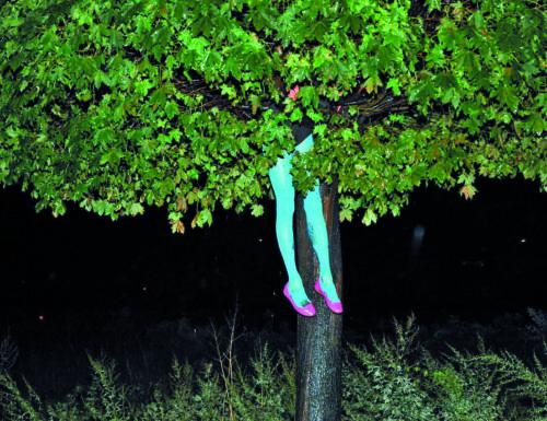 """Al Muse si ascolta """"la voce degli alberi"""""""