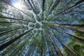 Accolta la sfida del WWF: per un'Italia più verde, decarbonizzata e sostenibile