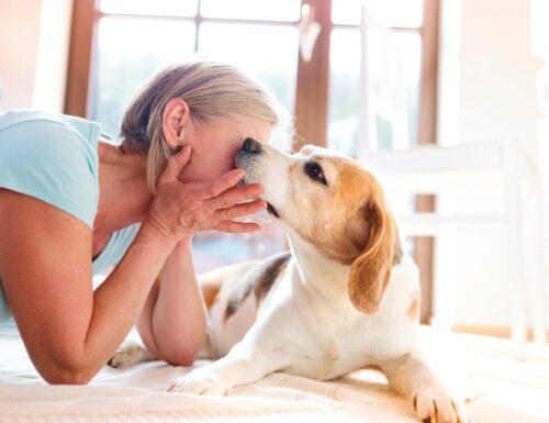 Pet-therapy, linee guida per interventi con gli animali