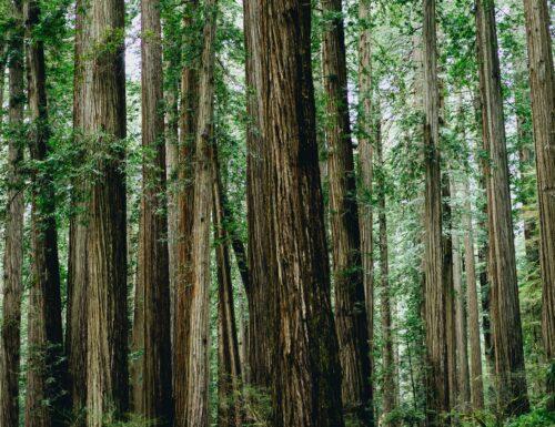 WeTree: non un fiore per le donne, ma dalle donne alberi per il mondo