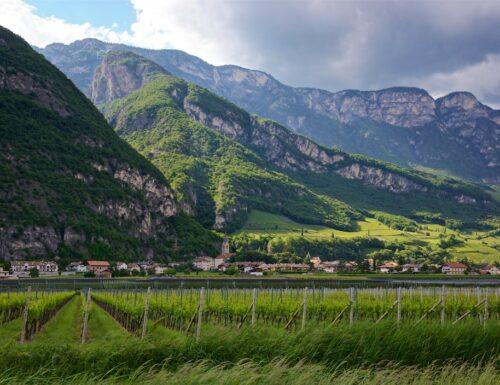 Alois Lageder passa alla IGT Vigneti delle Dolomiti