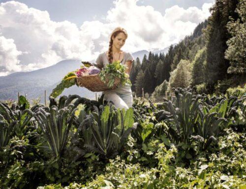 Agricoltura, cibo e paesaggio: riflessioni su alcune pratiche alimentari