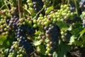 Agricoltura sostenibile e di qualità, Trentino all'avanguardia in Italia