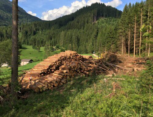 Val di Fiemme: rinascere dopo Vaia, albero per albero