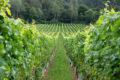Nasce Vineas: piattaforma web di incontro e collaborazione del vino mediterraneo