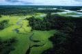 """Nelle foreste """"antiche"""" il futuro della biodiversità"""