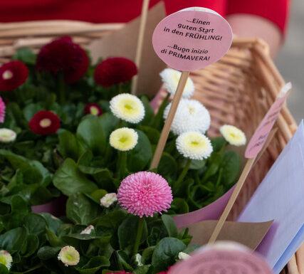 """""""Buon inizio di primavera!"""". L'Azienda di Soggiorno di Merano lo dice con un fiore"""