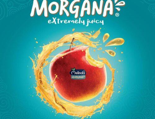 "Melinda ""Morgana"": al via la nuova stagione"