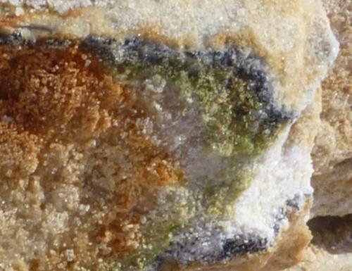 Scoperti nuovi batteri in Antartide: merito anche della Fondazione Mach