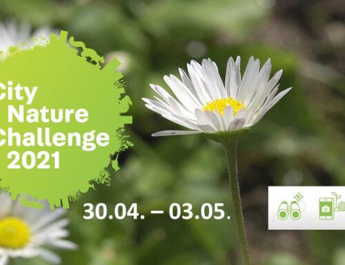 City Nature Challenge 2021: diventa anche tu un Citizen scientist