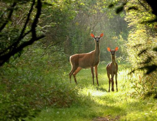Bambi va sempre più in alto