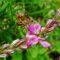 Fiori, erbe e sapori: ricco calendario di attività a Predazzo