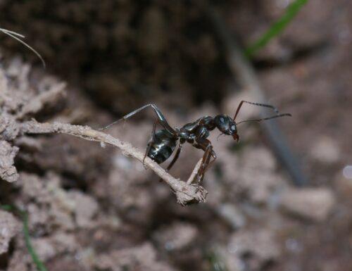 Alla scoperta delle formiche con il Museo di Scienze Naturali dell'Alto Adige
