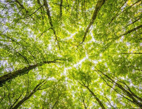 Le Regioni Italiane e la sfida della neutralità climatica